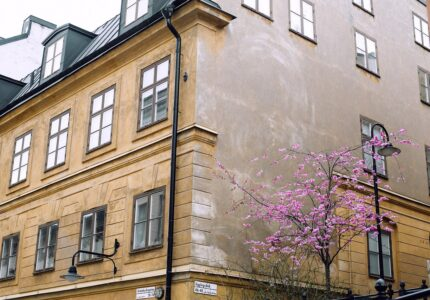 Lejlighedskompleks med flot lyserødt træ