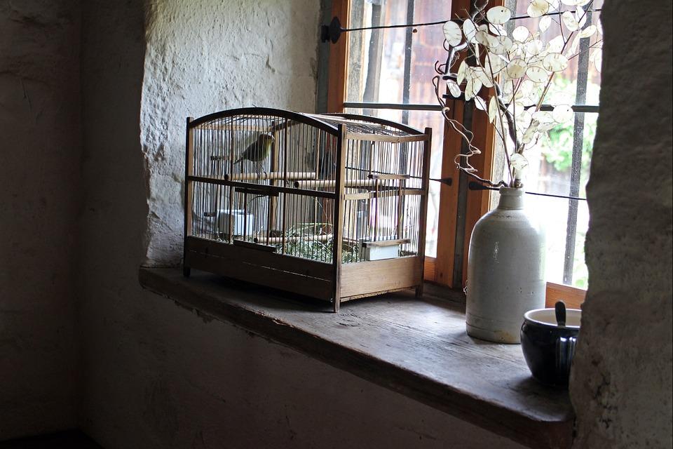 Hyggeligt fuglebur til kælefugl